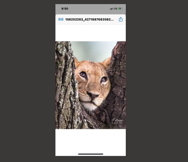 download instagram photos 7